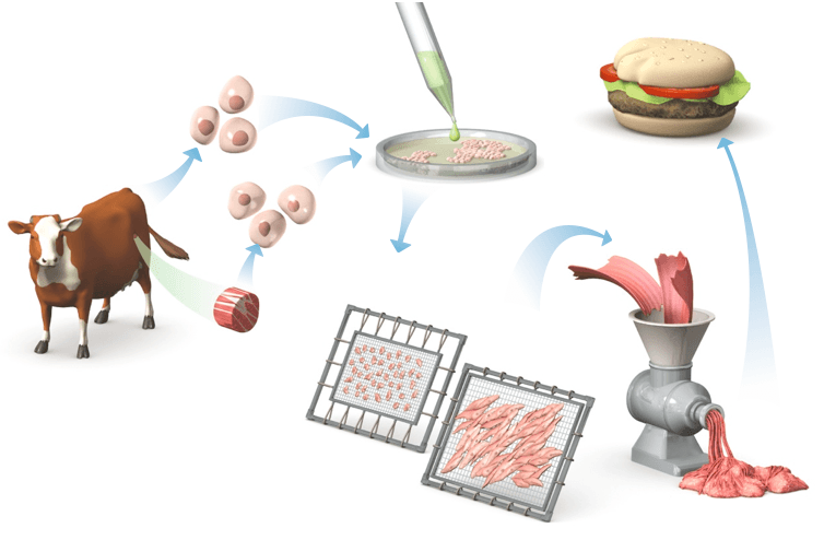 Visual of Grossed Out by Lab-Grown Meat? Here's 7 Reasons Why You Shouldn't Be