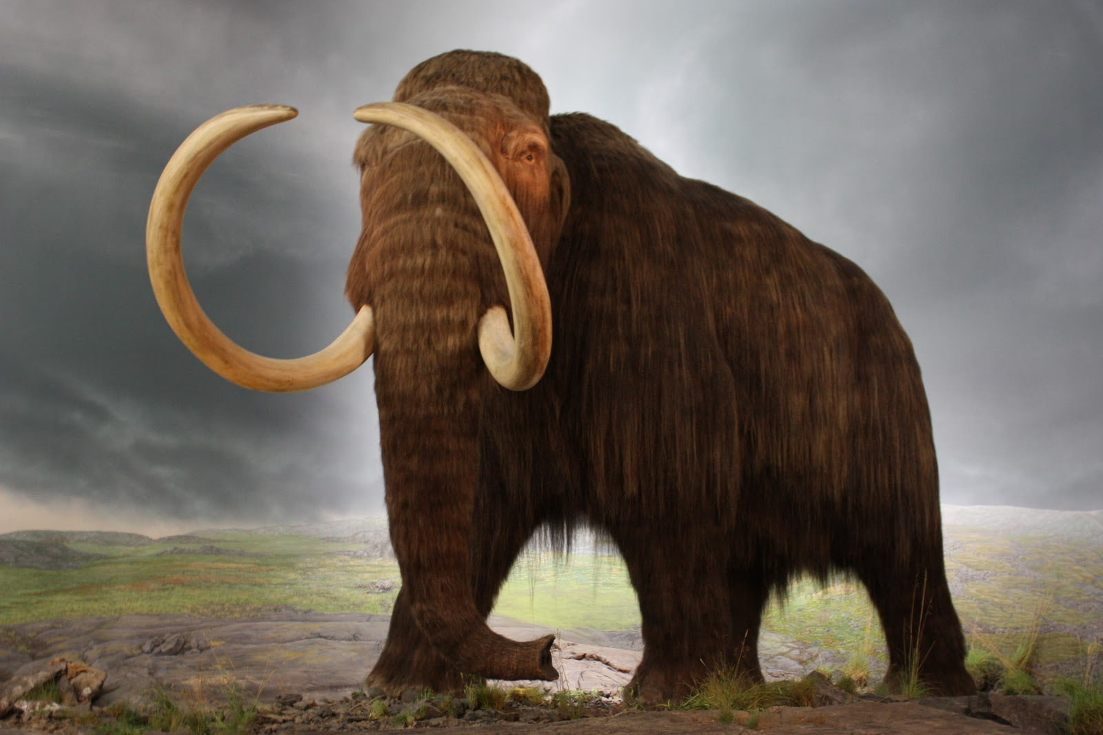 Visual of Moments in Meat History Part II- The Last Mammoths