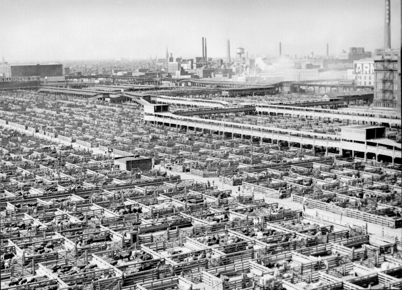 Visual of Moments in Meat History Part V- Industrialization of Farming