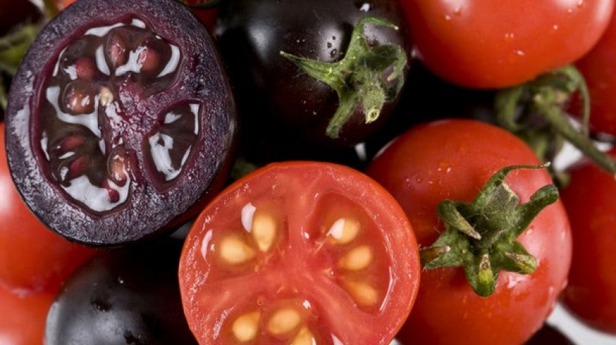 Visual of Purple GM Tomatoes Prevent Cancer