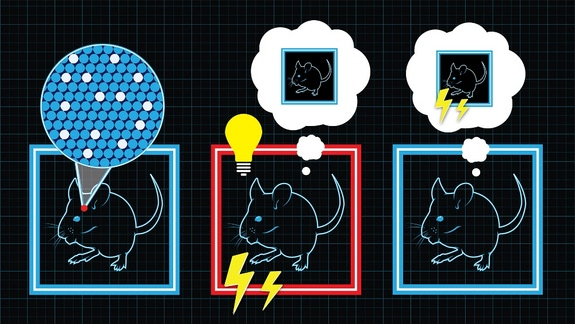 Visual of Scientists Implant False Memory in Mice