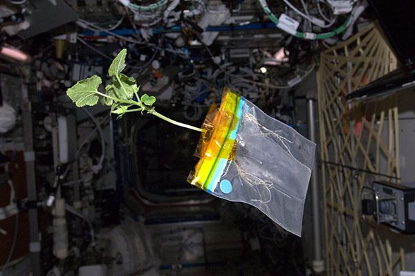 Visual of Space Farming for Astronauts