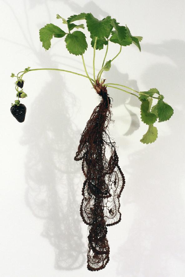 Visual of Strawberry Noir