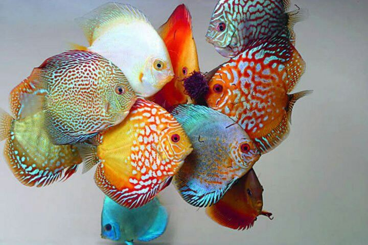 Visual of Taste the Artificial Fish Rainbow