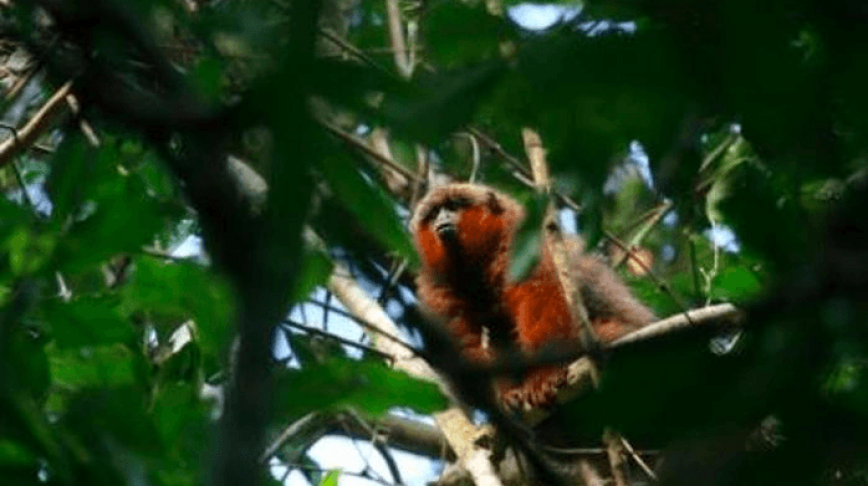 Visual of The Monkey Named After a Website