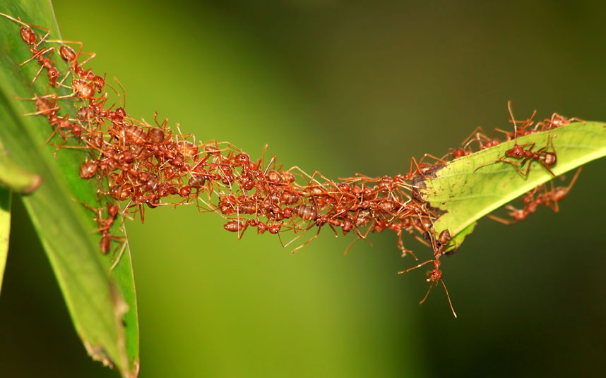 Visual of What Ant Colony Networks Can Tell Us About What's Next for Digital Networks