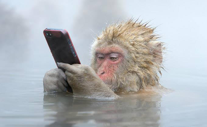 Visual of Animals Love Technology