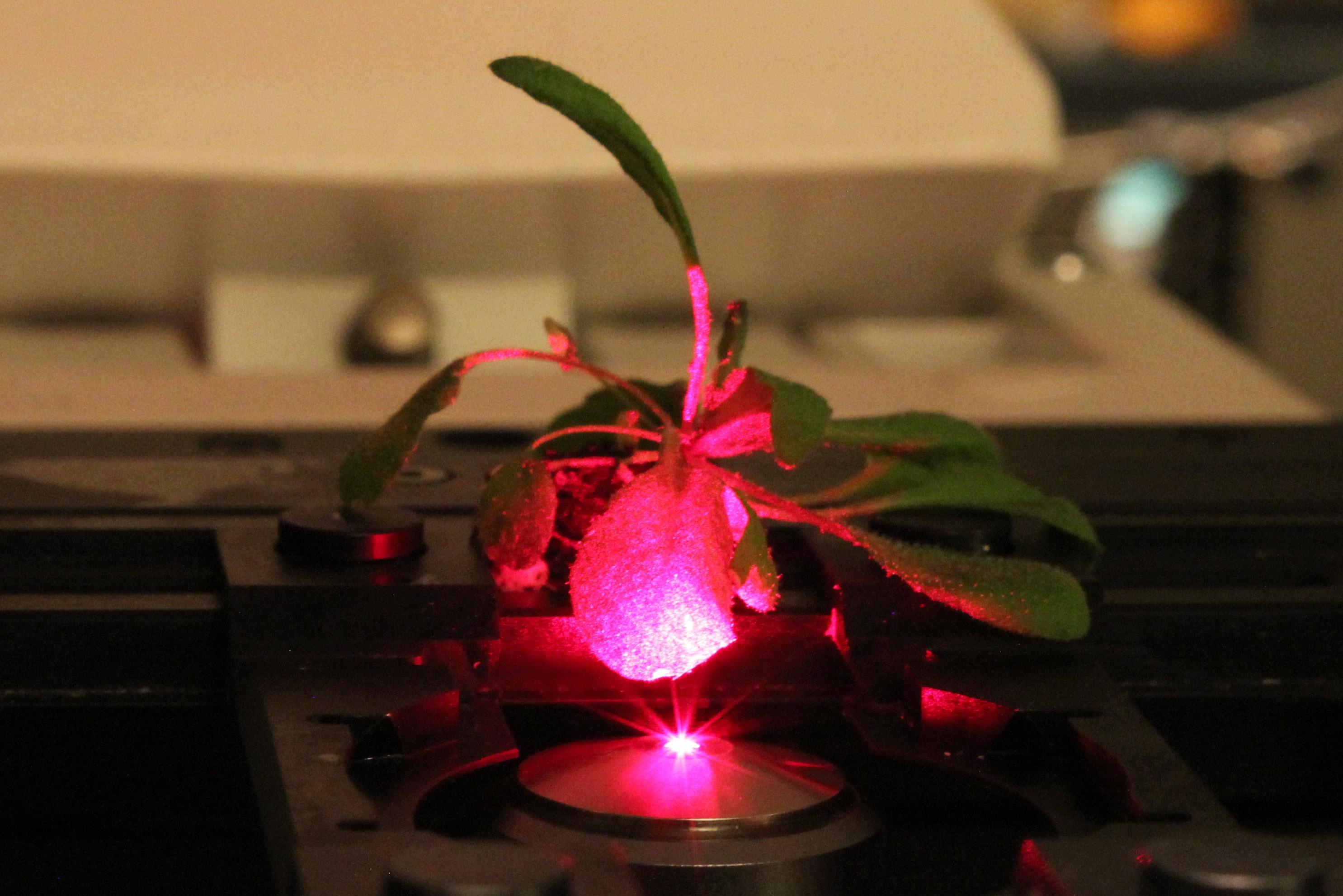Visual of Bionic Plants