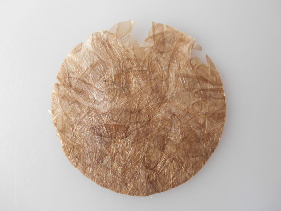 Visual of Bioplastic Made of Pressed Insect Shells