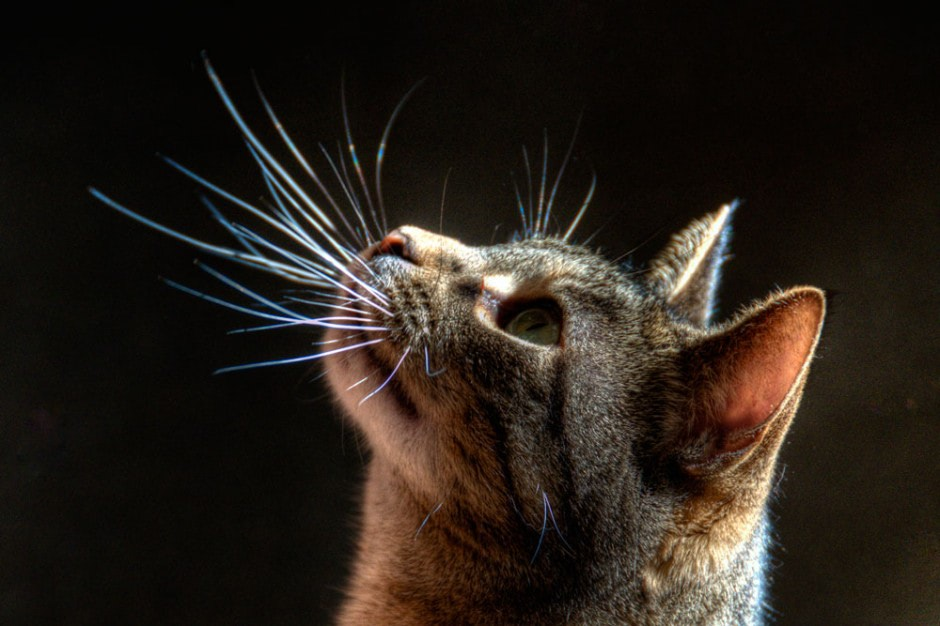 Visual of Cat-like Sensitive Whiskers for Robots