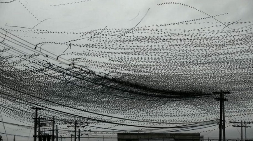 Visual of Flight Paths Of Birds Captured On Video