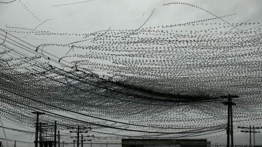 Visual of Flight Paths Of Birds Captured On Video
