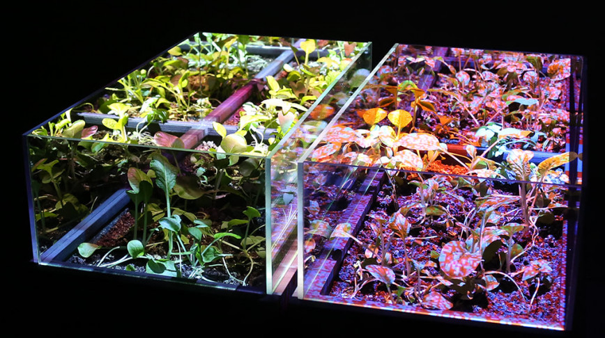 Visual of Growing Crops with Video Projections