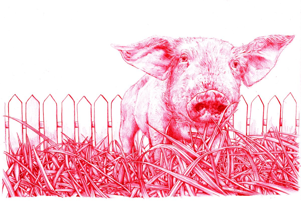 Visual of In Vitro Meat: Animal Liberation?