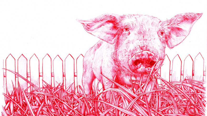 Visual of In Vitro Meat: Animal Liberation?