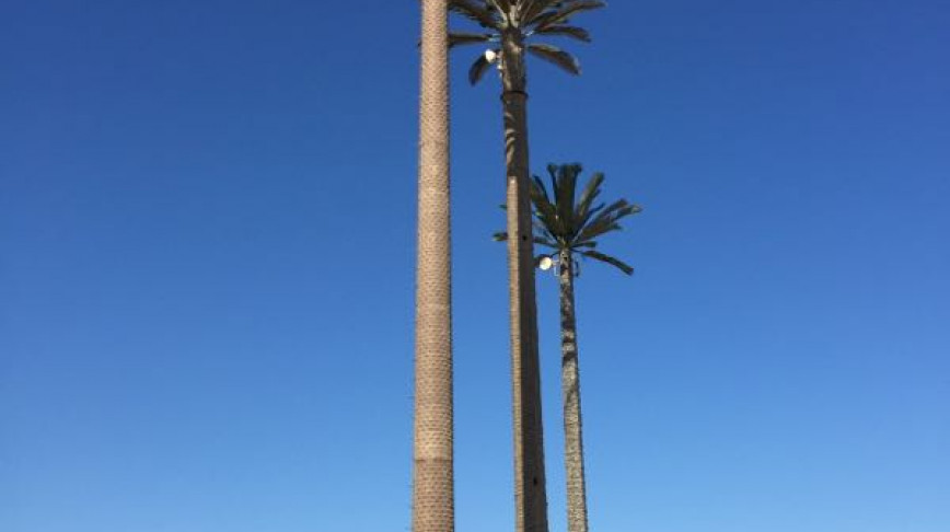 Visual of Palm Tree Antenna