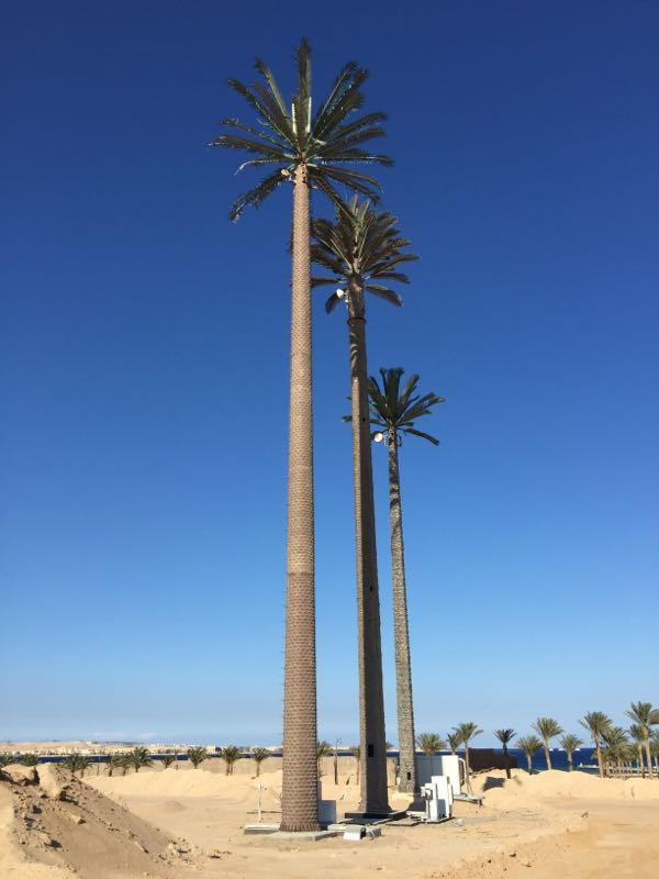 Visual of Palm Tree Antenna