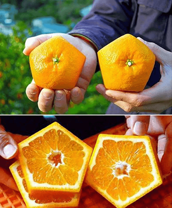 Visual of Pentagonal Orange