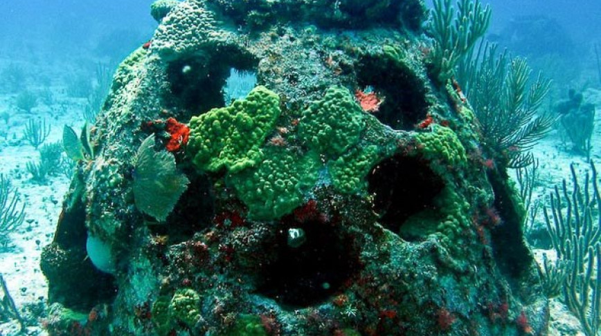 Visual of Spend Eternity As An Artificial Coral Reef