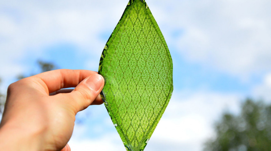 Visual of The First Man Made Leaf Looks like a Leaf