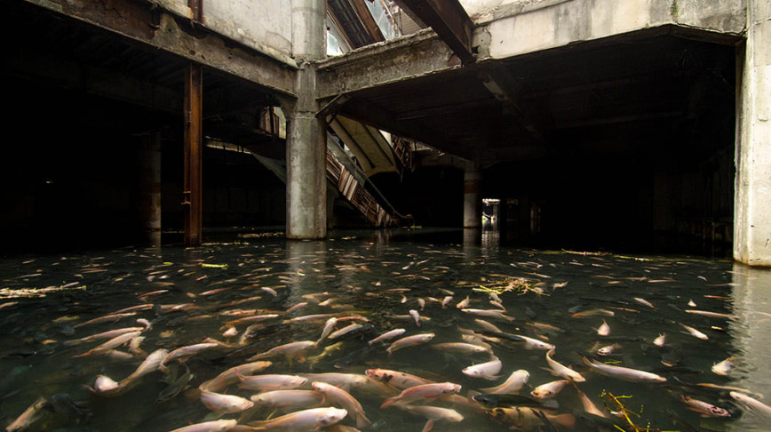 Visual of Urban Aquarium in an Abandoned Mall