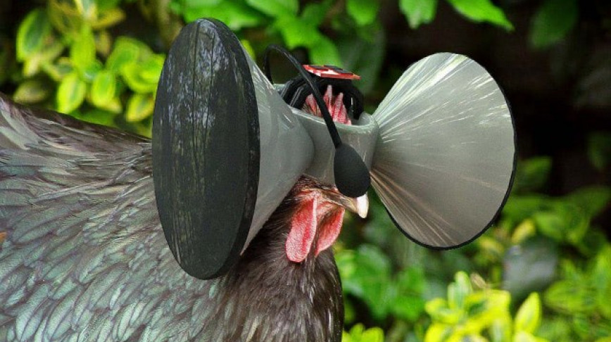 Visual of Virtual Reality Headset for Chickens