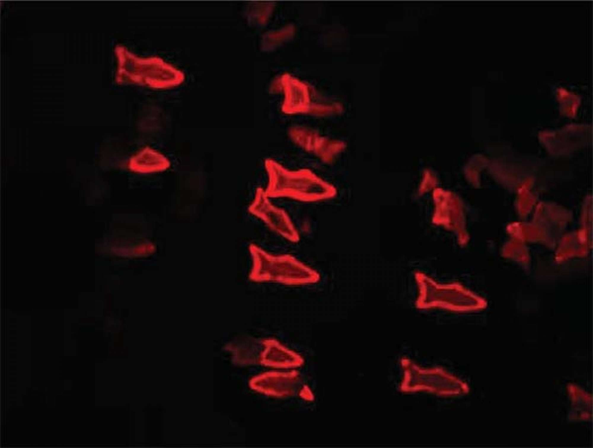 Visual of 3D Printed Fish Remove Toxins and Deliver Drugs