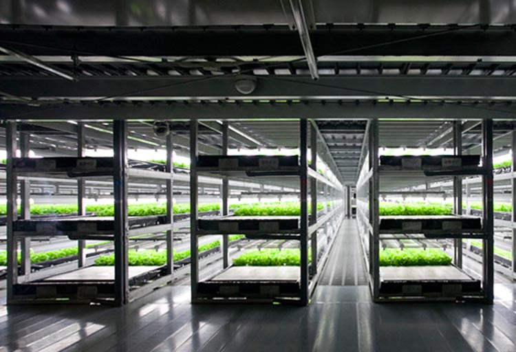 Visual of Did a Robot Grow your Vegetable?
