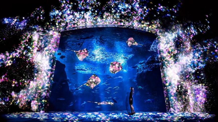 Visual of Digital Aquarium Powered by Real Fish