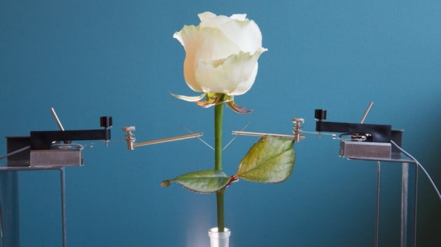 Visual of First Bionic Rose with Electronic Circuits