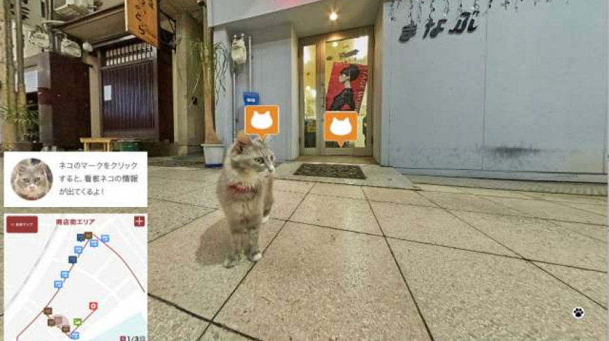 Visual of Forget Google Street View, Here's Cat Street View