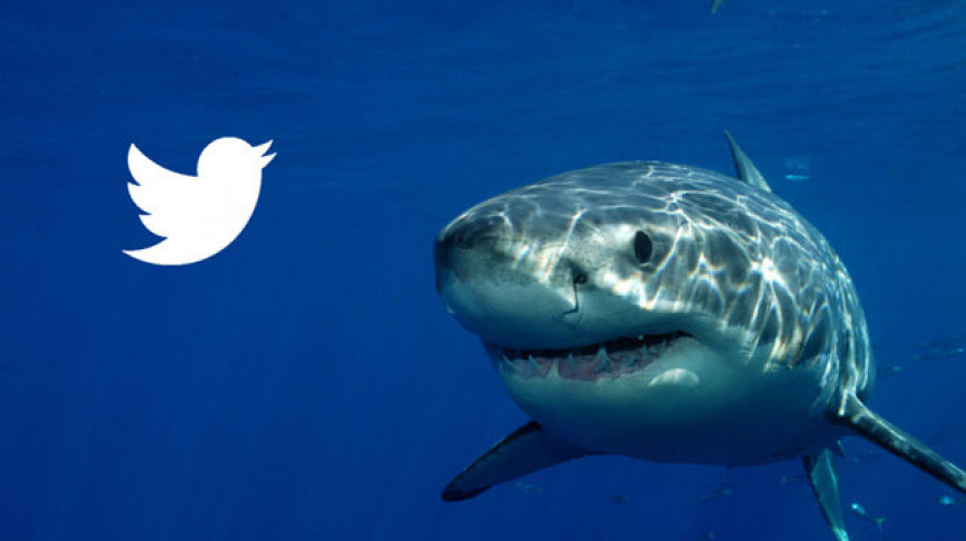 Visual of Over 300 Sharks are Now on Twitter