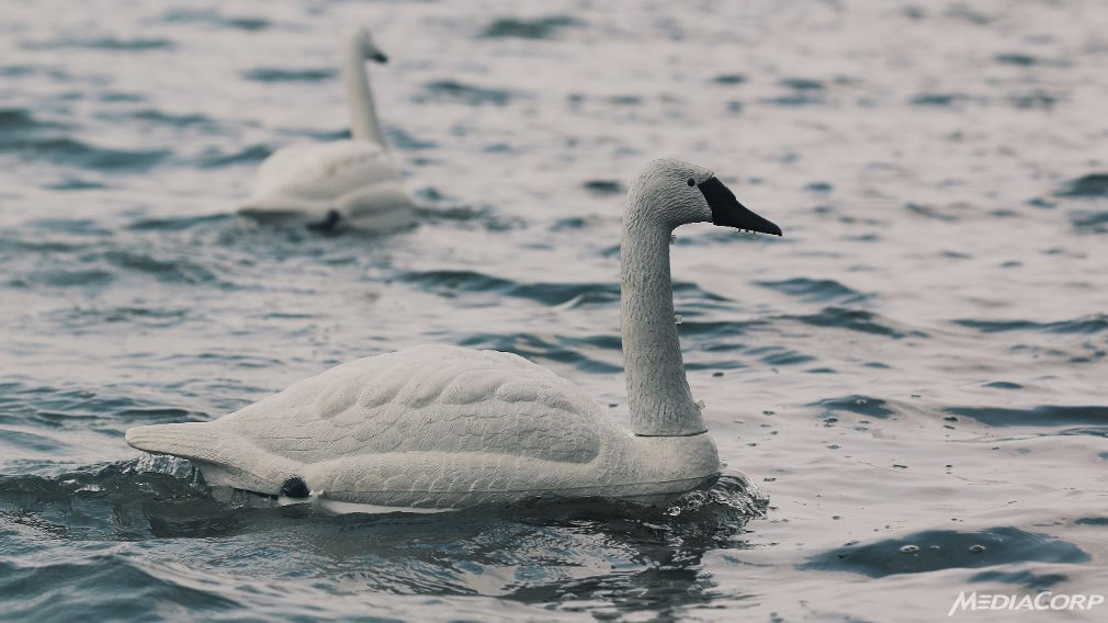 Visual of Robot Swans Monitor Water Quality