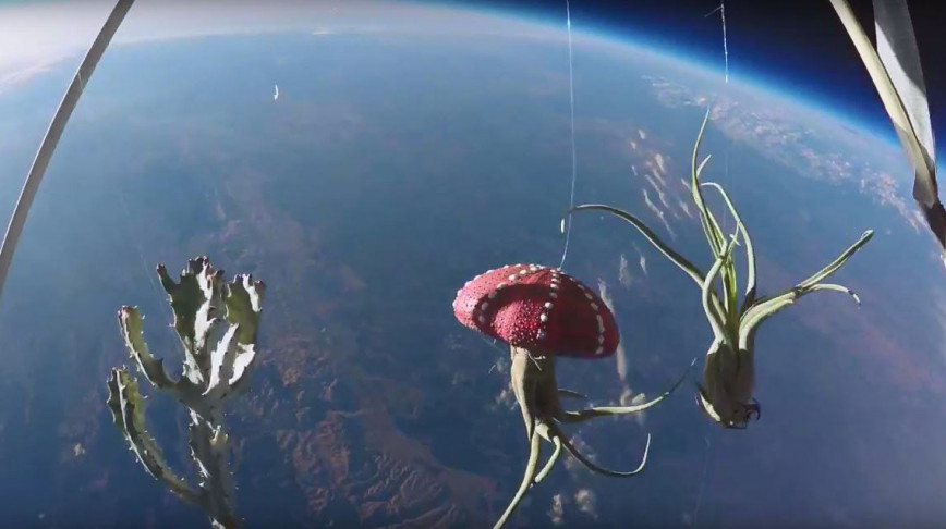 Visual of Stratospheric Sky Garden with Proto Life