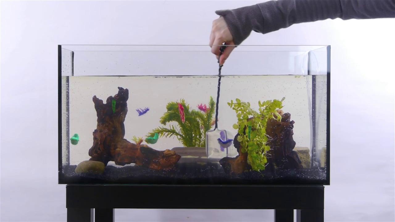 Visual of Teppanyaki from the In Vitro Aquarium