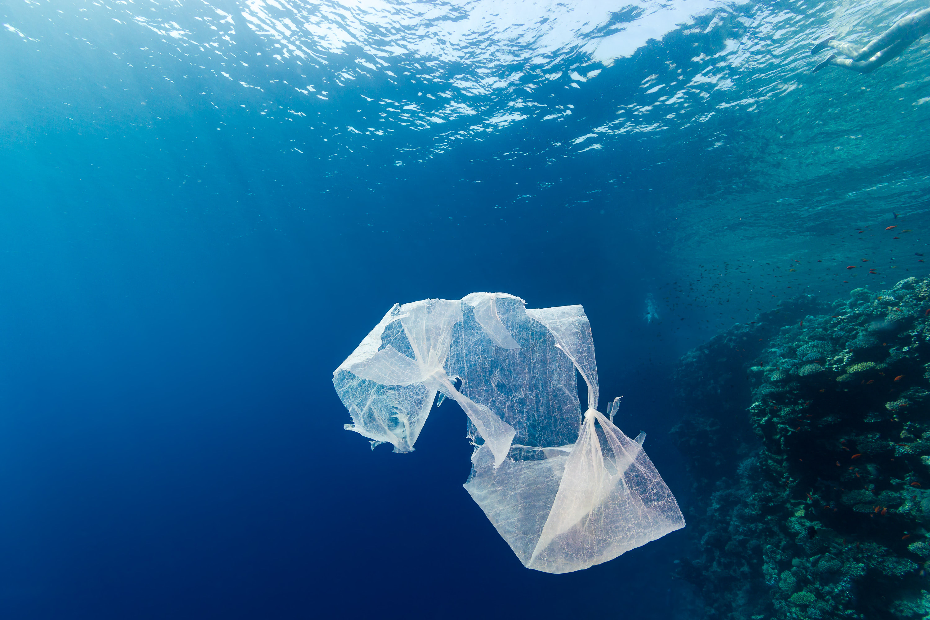 Visual of The Plastic Problem #1: Biobased and Biodegradable Plastic