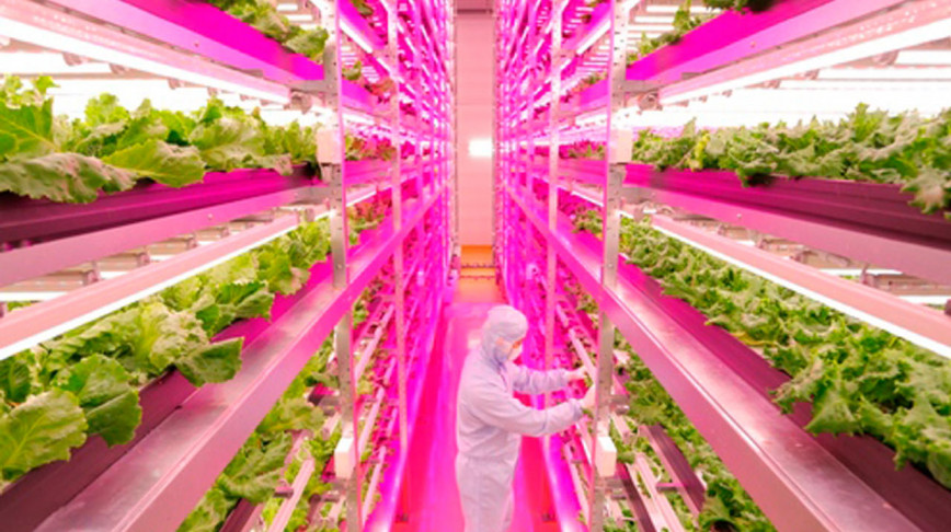 Visual of The World's Largest Indoor Farm