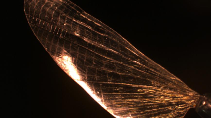 Visual of Using Shrimp Shell to Produce Bioplastics