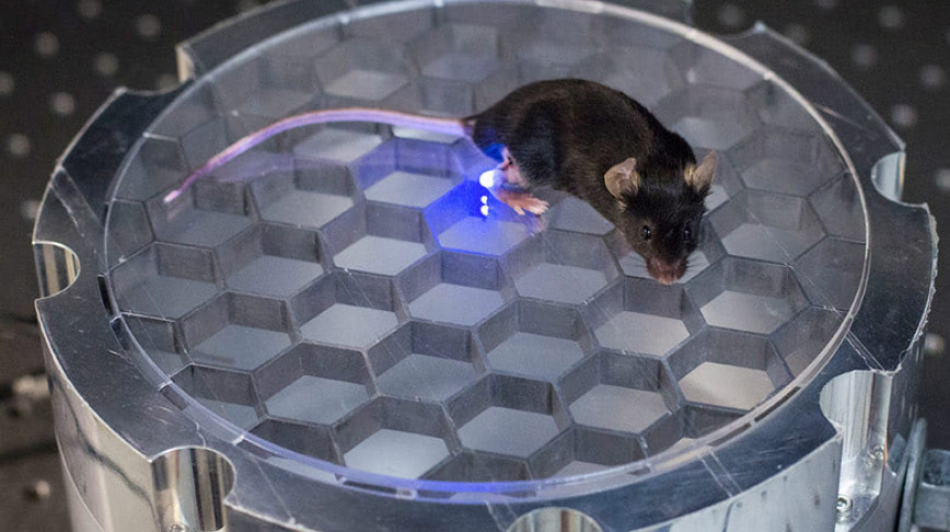 Visual of Wireless Controlled Mouse, the Animal!