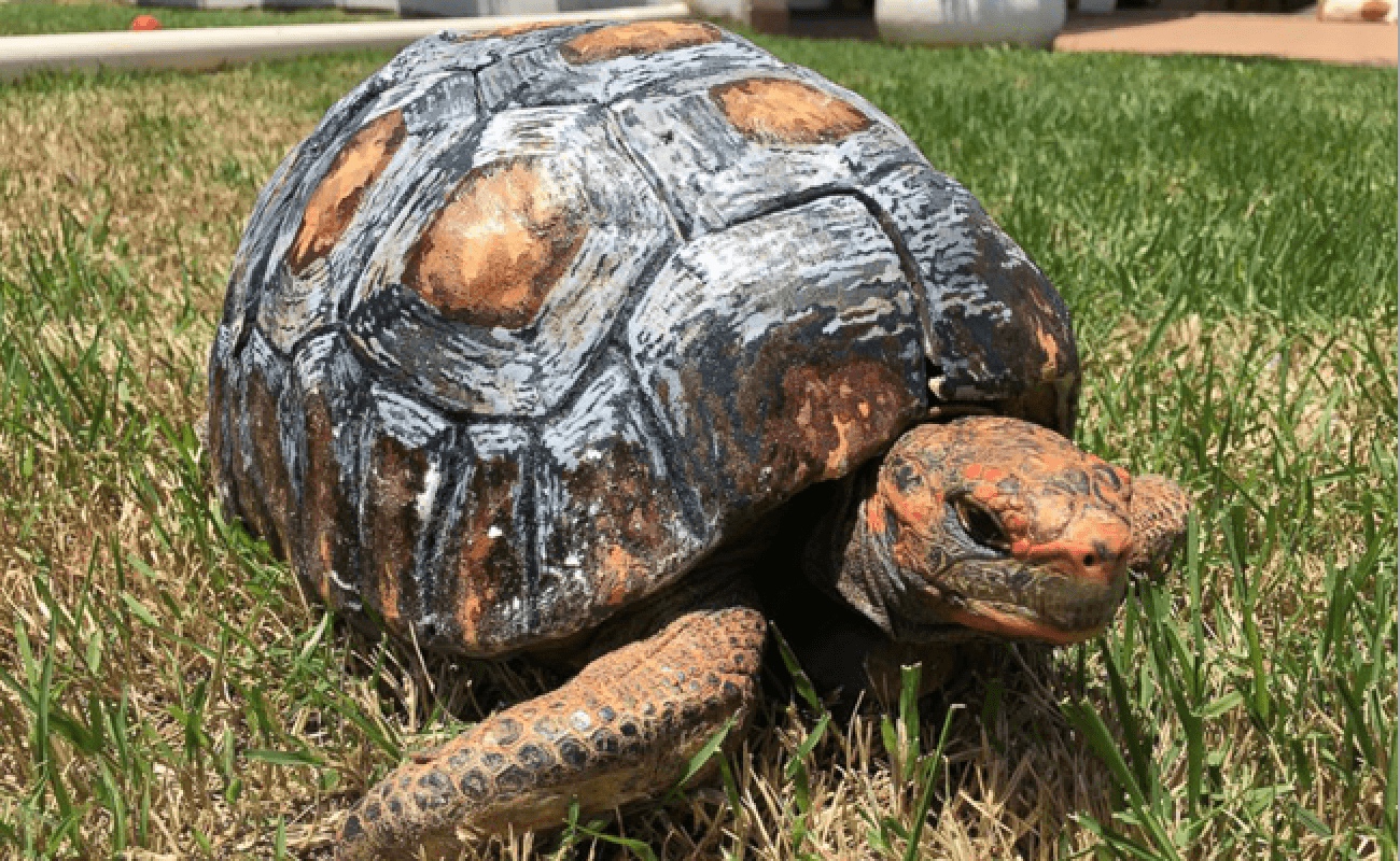 Visual of 3D-Printed Shell to Save Tortoise's Life