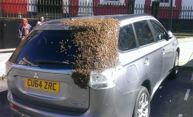 Visual of Bees to the Rescue of Their Queen