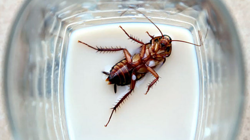 Visual of Cockroach Milk: the Next Superfood?
