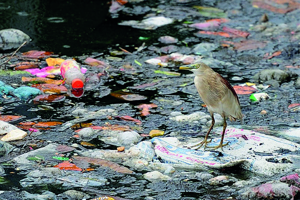 Visual of Eating Plastic or Krill: a Smelly Story for Birds