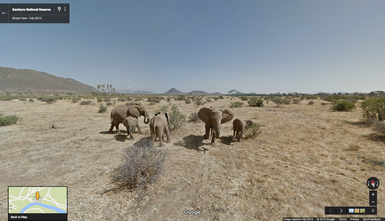 Visual of Experience a Real Safari, Google-Style