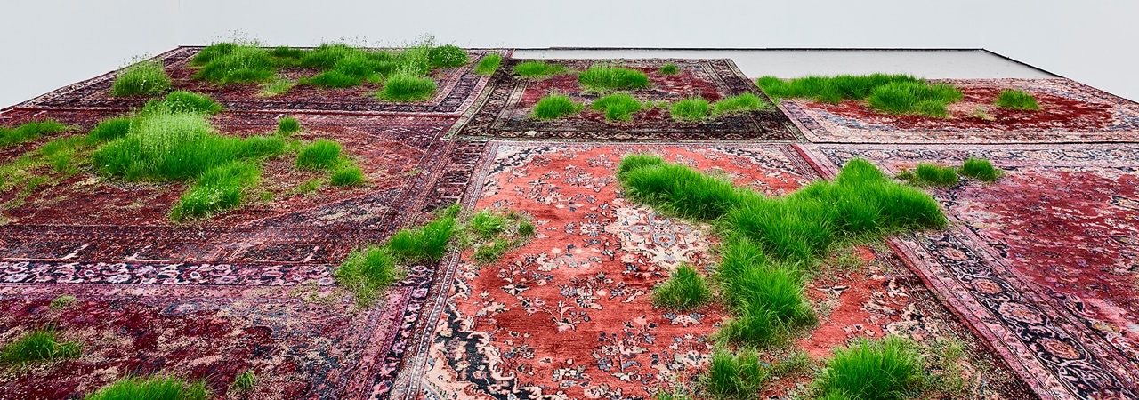 Visual of Growing Grass from Carpets