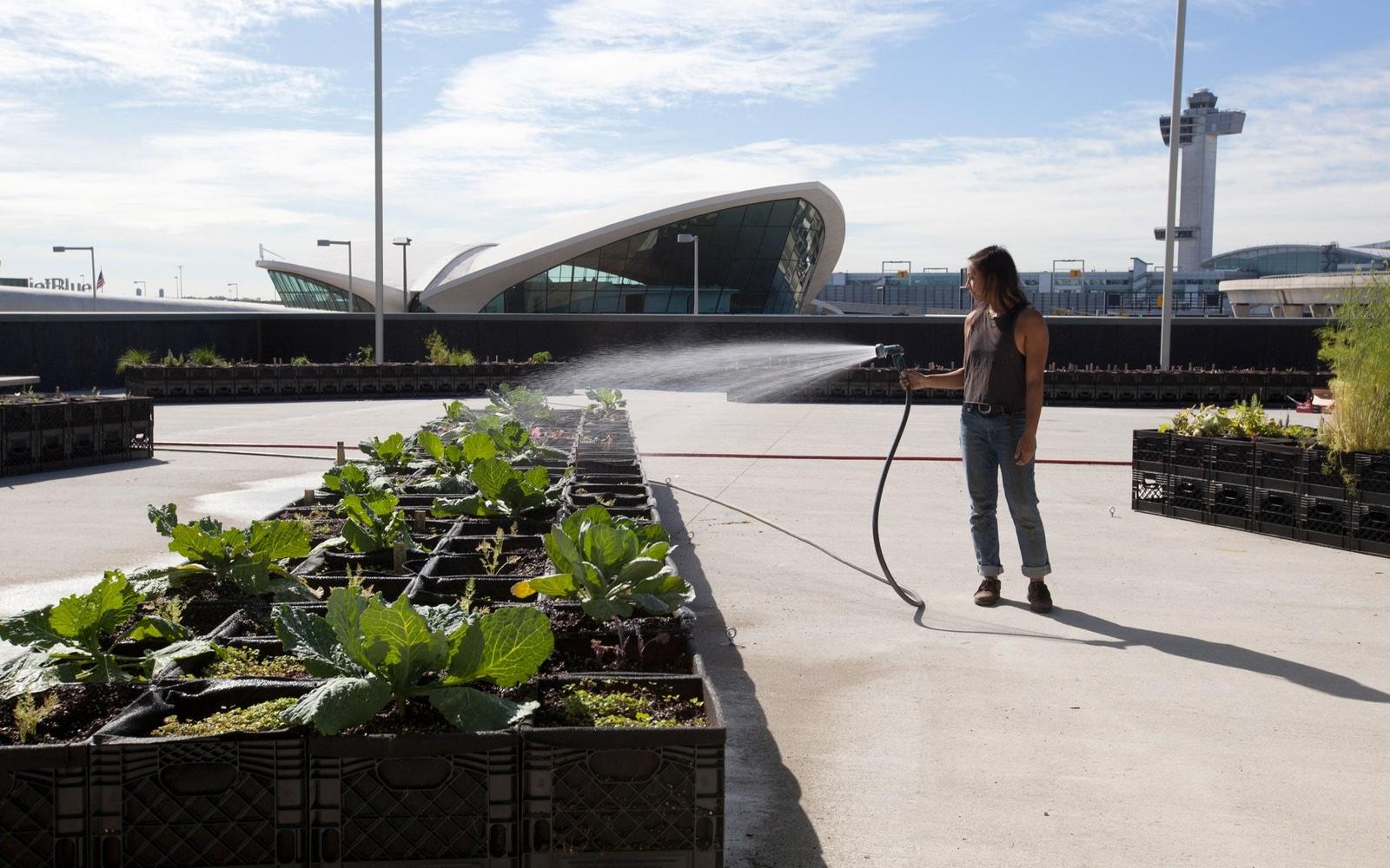Visual of Growing Potatoes at JFK Airport