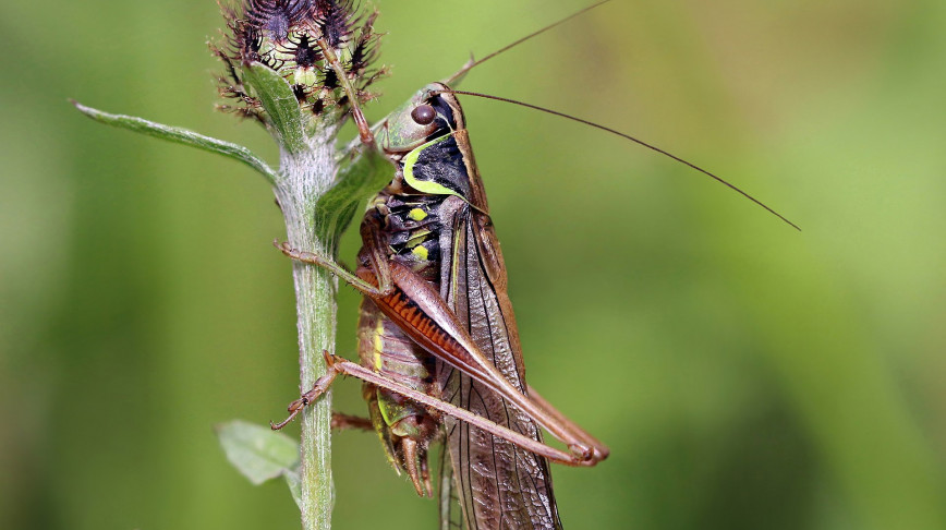 Visual of Insects are helping us develop the future of hearing aids