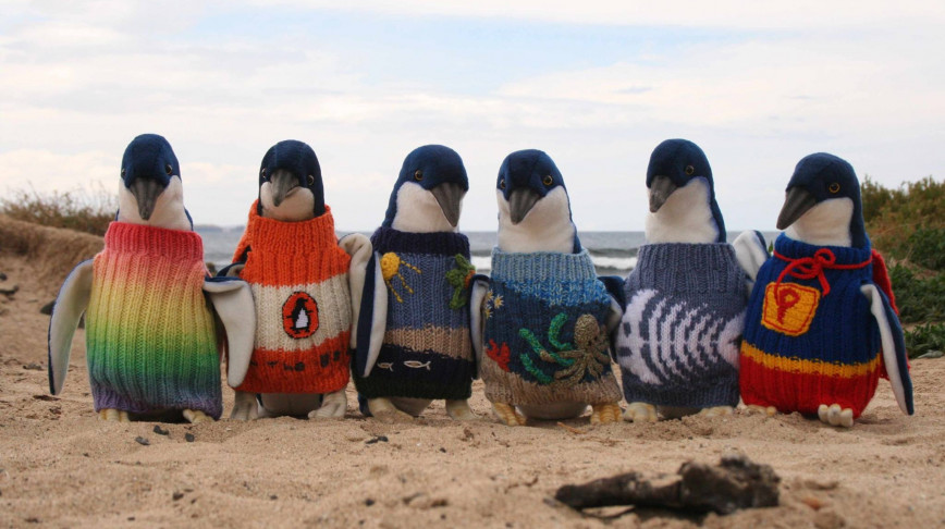 Visual of How Knitwear Can Save Penguins