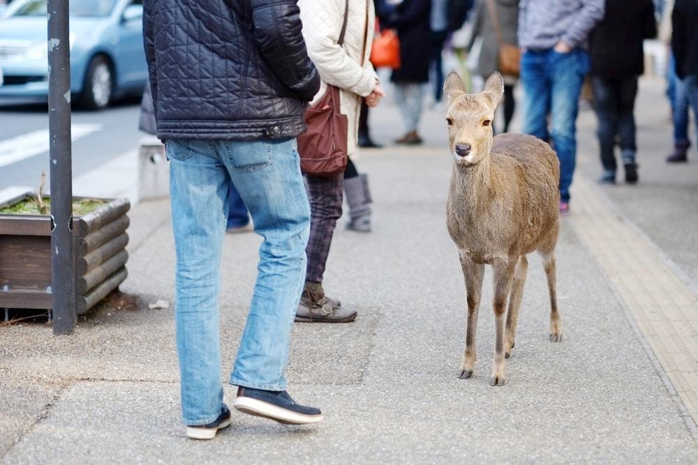 Visual of We Love Cities, so Do Wild Animals
