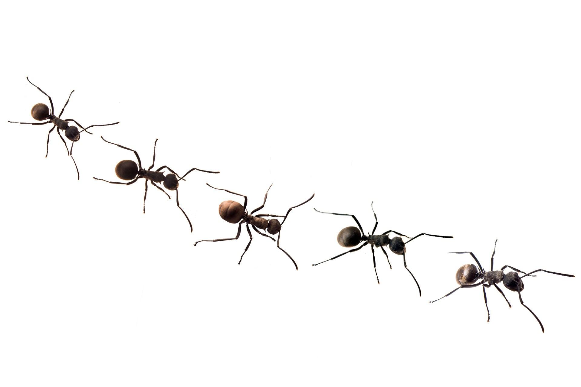 Visual of Meet Biomimic Alyssa Stark